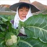 坂本圭子(高坂町・農業)